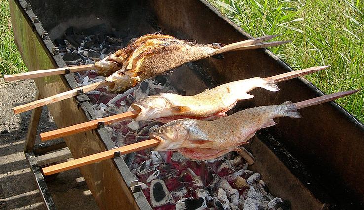 images/sfSteckerfisch.png